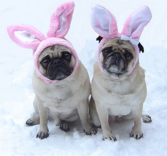 easter bunny pet photo